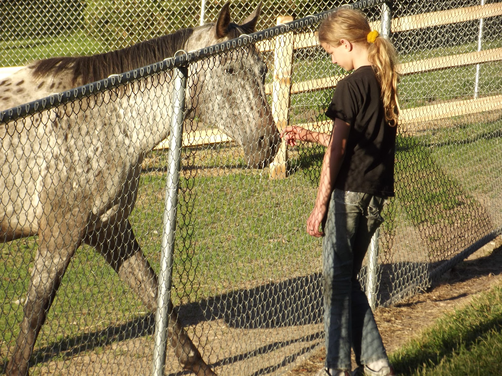 Boy petting horse through a fence