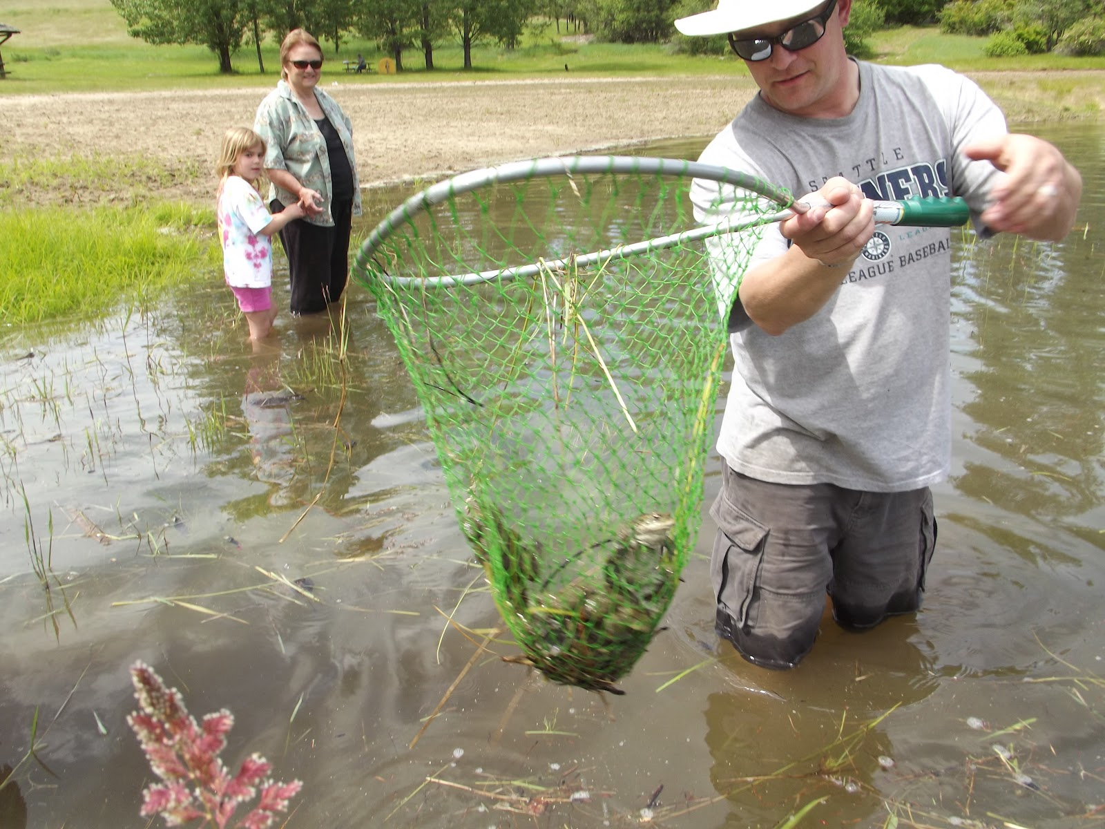 Scooping frogs into a net