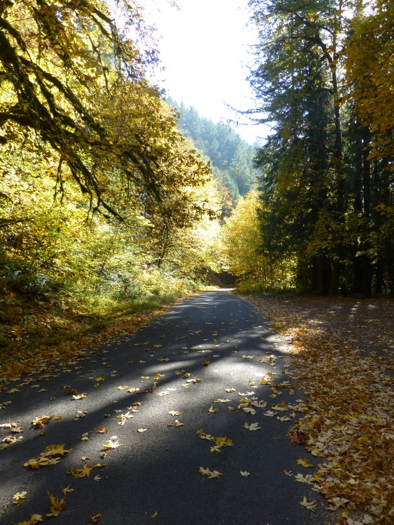 Sun dappled forest path in autumn. Too many choices: the frugality trap
