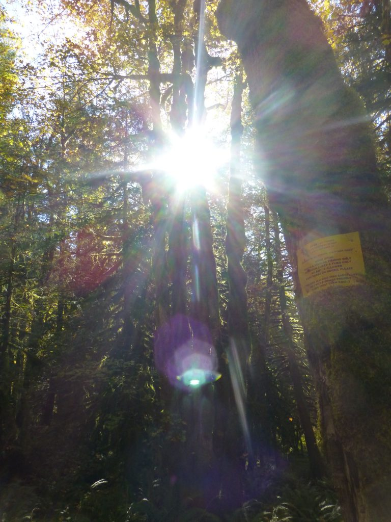 Sun burst through trees-autmn forest